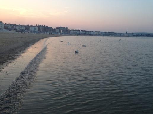 Seagulls evening